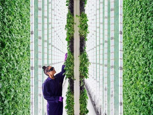 Ngỡ ngàng với trang trại thẳng đứng, robot thoăn thoắt trồng cây - 1