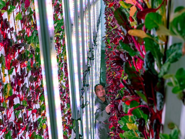 Ngỡ ngàng với trang trại thẳng đứng, robot thoăn thoắt trồng cây - 4