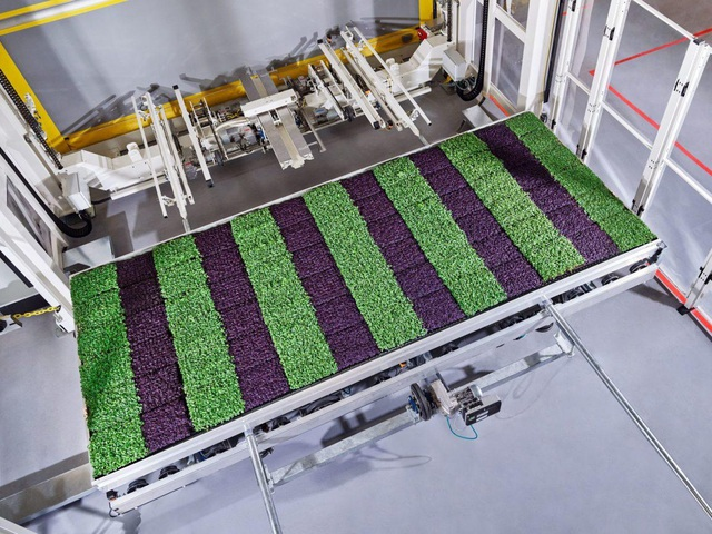 Ngỡ ngàng với trang trại thẳng đứng, robot thoăn thoắt trồng cây - 5