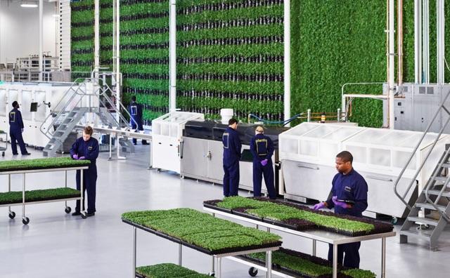 Ngỡ ngàng với trang trại thẳng đứng, robot thoăn thoắt trồng cây - 6