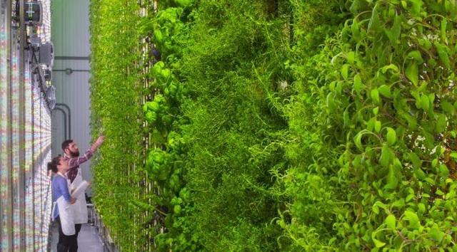 Ngỡ ngàng với trang trại thẳng đứng, robot thoăn thoắt trồng cây - 7