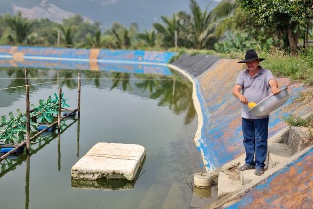 Bỏ nuôi tôm chuyển qua nuôi cá dìa, bác nông dân ở Đà Nẵng thu lãi tiền tỷ - 1