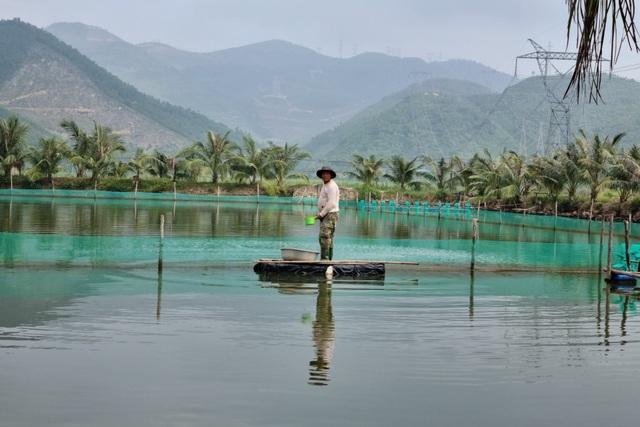 Bỏ nuôi tôm chuyển qua nuôi cá dìa, bác nông dân ở Đà Nẵng thu lãi tiền tỷ - 3