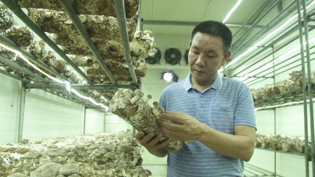 Bỏ ngang đại học đi trồng nấm, đại gia nông dân thu gần 40 tỷ đồng/năm - 1