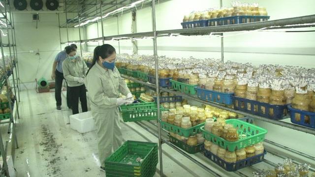 Bỏ ngang đại học đi trồng nấm, đại gia nông dân thu gần 40 tỷ đồng/năm - 7
