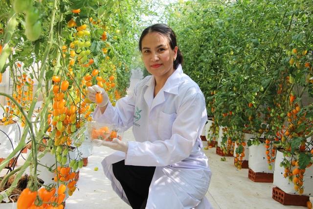 Cô giáo có thu nhập lý tưởng nhờ trồng cà chua công nghệ cao - 1