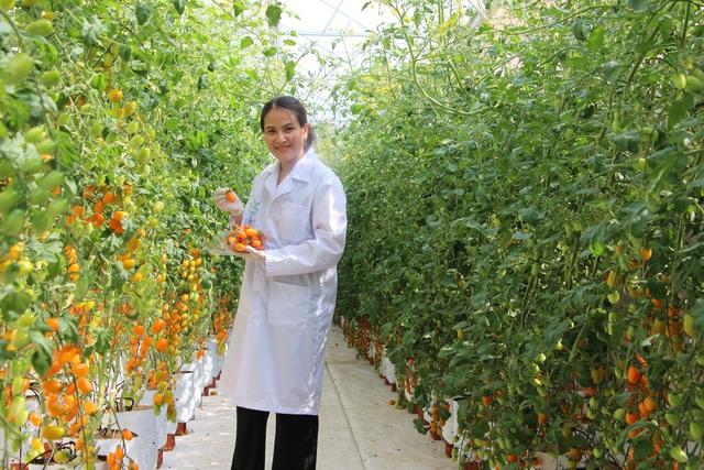 Cô giáo có thu nhập lý tưởng nhờ trồng cà chua công nghệ cao - 8