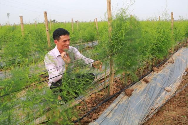 Chủ xưởng cơ khí thu 200 triệu/năm bỏ nghề về trồng măng tây làm giàu - 1