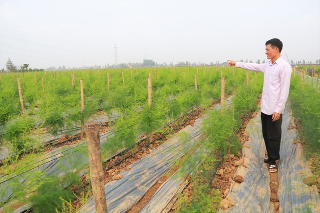 Chủ xưởng cơ khí thu 200 triệu/năm bỏ nghề về trồng măng tây làm giàu - 2