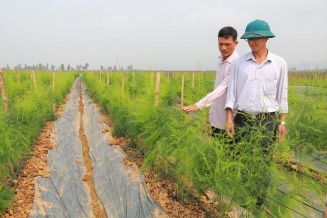 Chủ xưởng cơ khí thu 200 triệu/năm bỏ nghề về trồng măng tây làm giàu - 6
