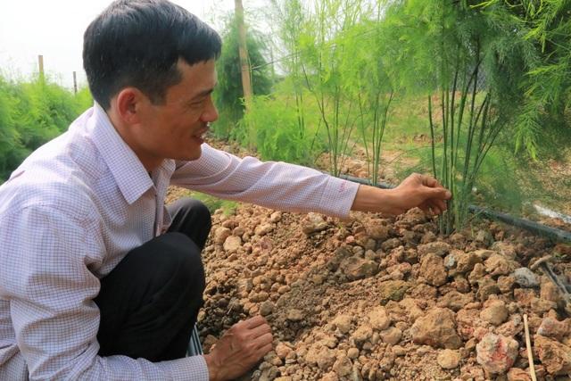 Chủ xưởng cơ khí thu 200 triệu/năm bỏ nghề về trồng măng tây làm giàu - 3