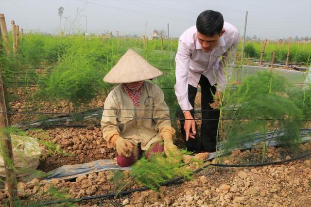 Chủ xưởng cơ khí thu 200 triệu/năm bỏ nghề về trồng măng tây làm giàu - 4