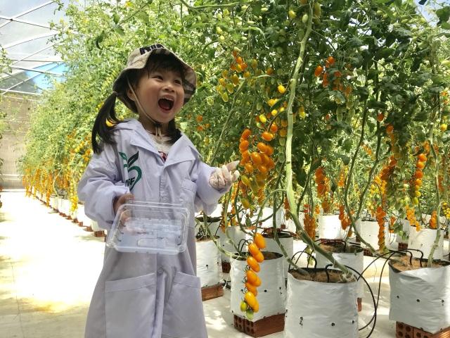 Cô giáo có thu nhập lý tưởng nhờ trồng cà chua công nghệ cao - 7