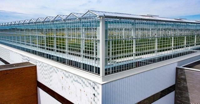 Choáng vườn sân thượng rộng bằng 3 sân bóng, cung cấp cả tấn rau mỗi tuần - 2
