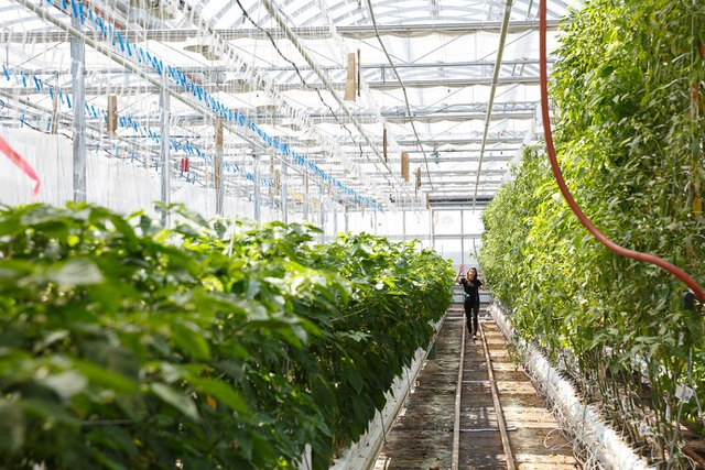 Choáng vườn sân thượng rộng bằng 3 sân bóng, cung cấp cả tấn rau mỗi tuần - 8