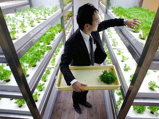 Lạ lùng công ty cho nhân viên trồng lúa, biến nơi làm việc thành vườn rau - 3