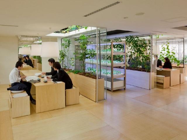 Lạ lùng công ty cho nhân viên trồng lúa, biến nơi làm việc thành vườn rau - 4