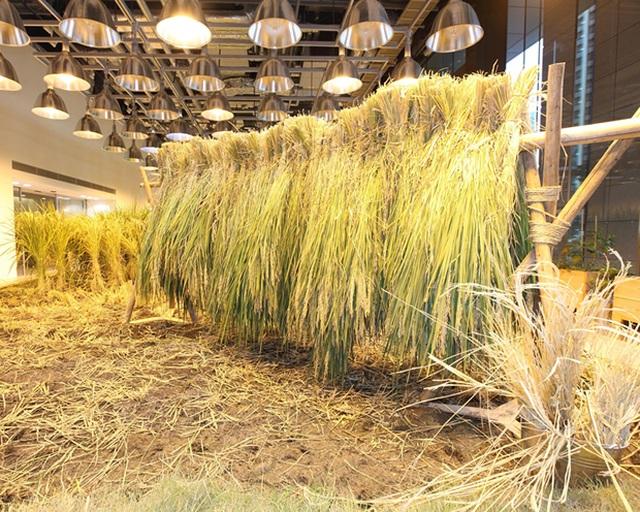 Lạ lùng công ty cho nhân viên trồng lúa, biến nơi làm việc thành vườn rau - 6
