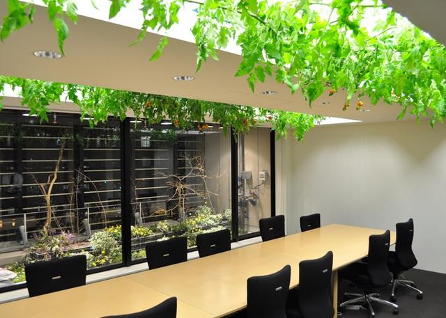 Lạ lùng công ty cho nhân viên trồng lúa, biến nơi làm việc thành vườn rau - 7