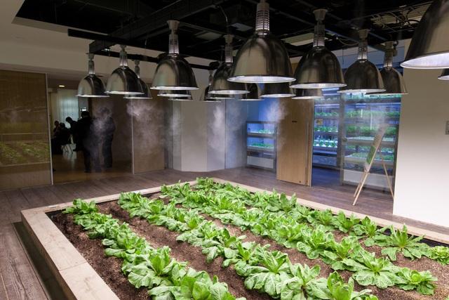 Lạ lùng công ty cho nhân viên trồng lúa, biến nơi làm việc thành vườn rau - 8