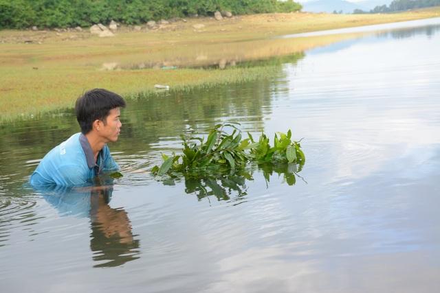 Quảng Nam: Kiếm tiền từ cách bắt tép độc chiêu ở hồ Phú Ninh - 3