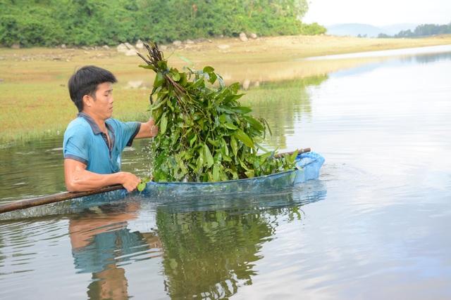 Quảng Nam: Kiếm tiền từ cách bắt tép độc chiêu ở hồ Phú Ninh - 4