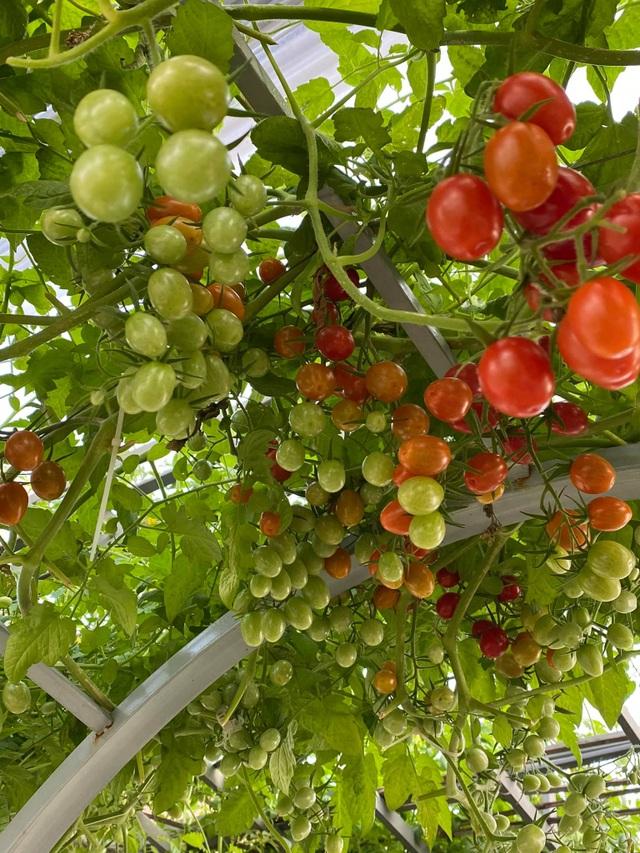 Khu vườn trên mây ở Quảng Nam: Cà chua, bí ngô lúc lỉu trên mái nhà - 2