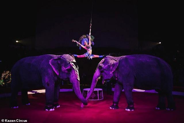 Hai con voi đánh nhau để giành quyền tranh sủng khiến rạp xiếc hỗn loạn - 3