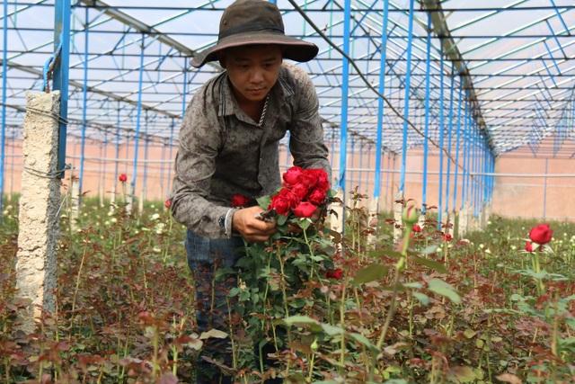 Bỏ việc ở Nhật, kỹ sư về quê trồng hoa thu đến 500 triệu đồng/tháng - 2