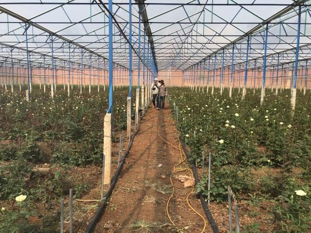 Bỏ việc ở Nhật, kỹ sư về quê trồng hoa thu đến 500 triệu đồng/tháng - 4