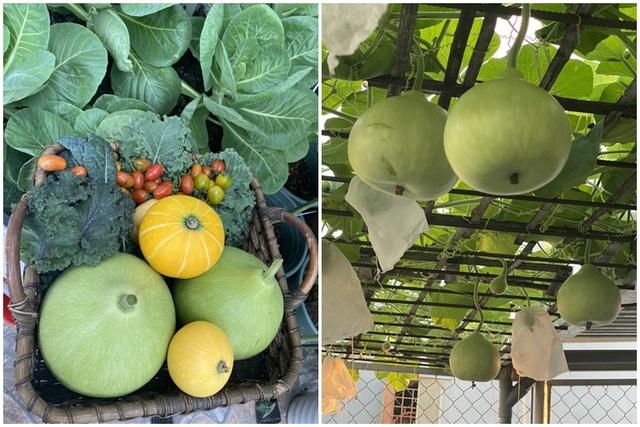 Khu vườn trên mây ở Quảng Nam: Cà chua, bí ngô lúc lỉu trên mái nhà - 4