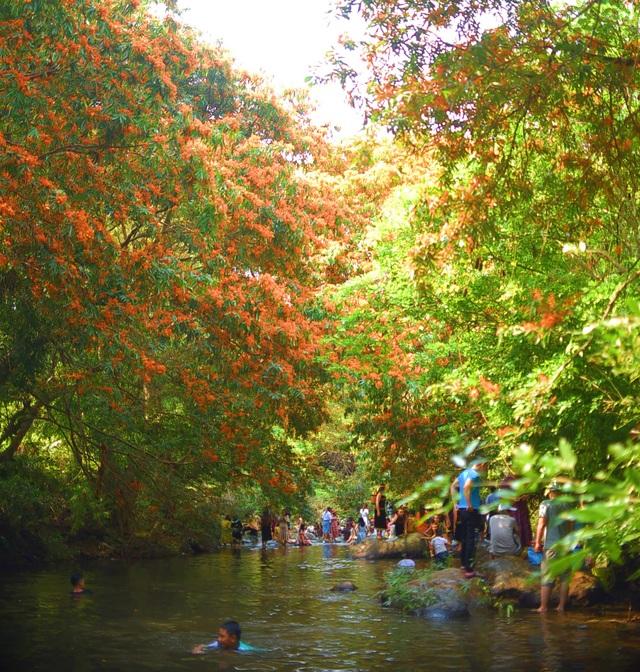 Hàng ngàn người rồng rắn ngắm loài hoa đặc biệt mọc ven suối ở Bình Định  - 5