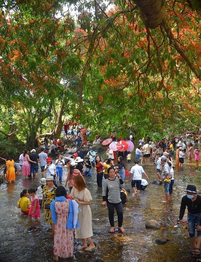 Hàng ngàn người rồng rắn ngắm loài hoa đặc biệt mọc ven suối ở Bình Định  - 4
