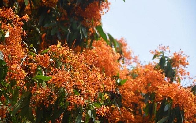 Hàng ngàn người rồng rắn ngắm loài hoa đặc biệt mọc ven suối ở Bình Định  - 7