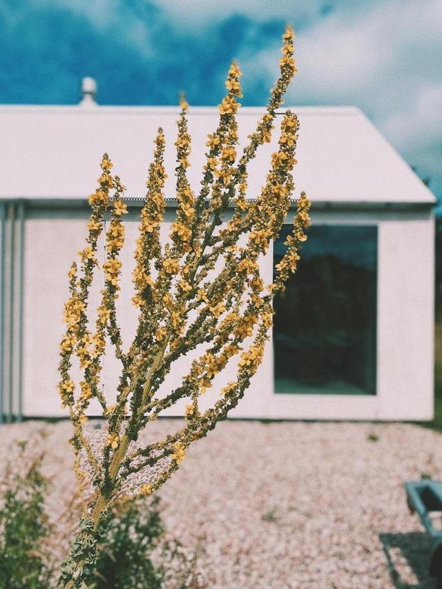 Ngôi nhà đẹp lạ như cồn muối, ôm trọn cả thiên nhiên - 7