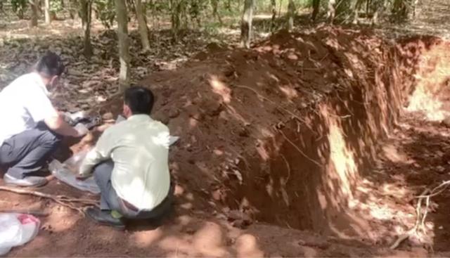 Lén lút chôn hơn 100 con heo chết trong rừng cao su - 2