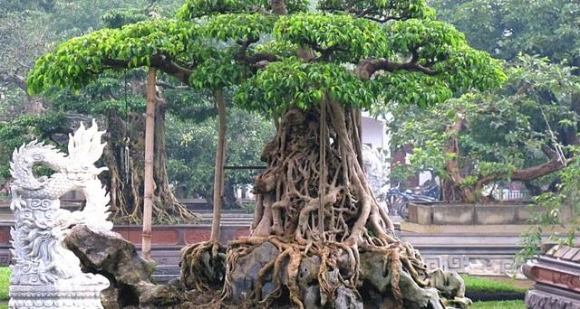 Té ghế với những loại cây có giá trên mây trăm tỷ đồng ở Việt Nam - 1