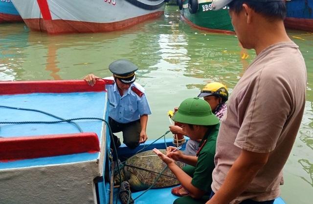 Rùa biển quý hiếm dài hơn 1m, nặng 120kg mắc lưới ngư dân - 1
