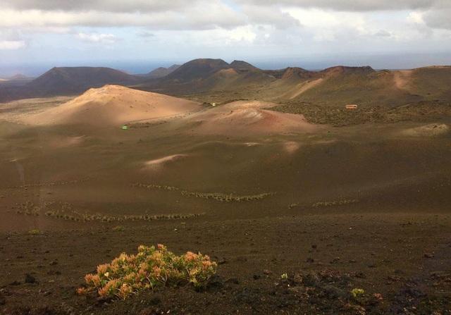 Cách trồng nho lạ trên đảo núi lửa, nông dân tạo ra rượu vang thượng hạng - 1