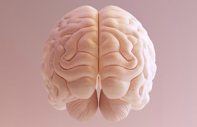 Vì sao con người  có bộ não lớn hơn các loài động vật khác? - 1