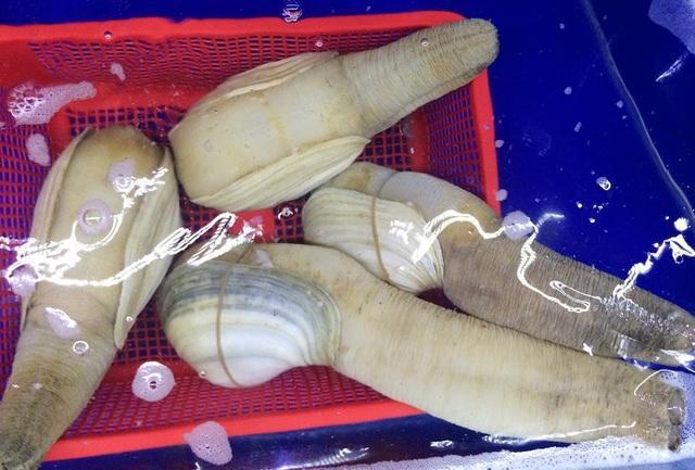 Ốc vòi voi khổng lồ đổ về Việt Nam, giá rẻ chưa từng có - 1
