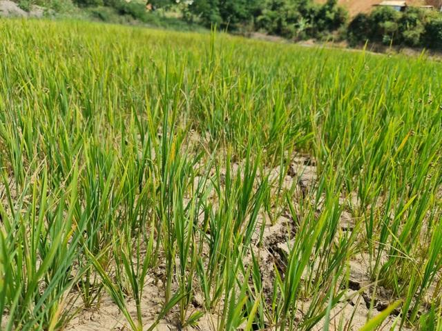 Lạ lùng kênh dẫn nước 90 tỷ độn thổ ở xã nghèo nhất tỉnh Đắk Nông - 4