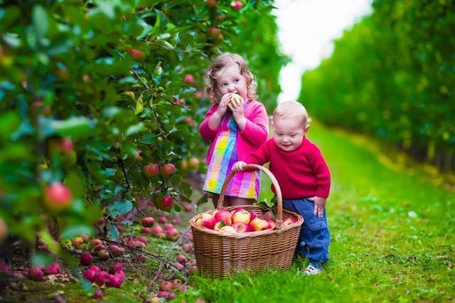 Trang trại Bellamys Organic thuộc nhóm 1% nông trại trên thế giới đạt chuẩn organic - 2