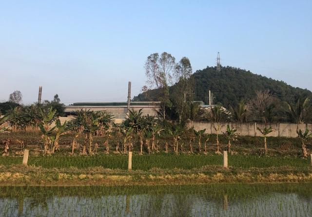 Nhiều cây chuối cạnh nhà máy sản xuất phân bón Phú Sinh bị cháy lá.