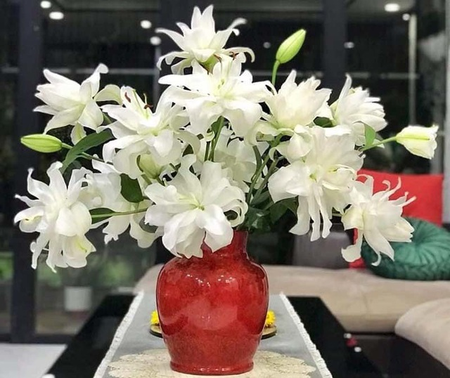 Loại hoa ly siêu đắt đỏ, chị em Hà thành ráo riết lùng mua - 3
