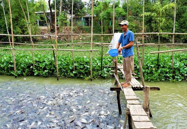 Kỳ lạ hàng ngàn con cá tra kéo đến nương nhờ nhà dân và chỉ ăn chay - 3