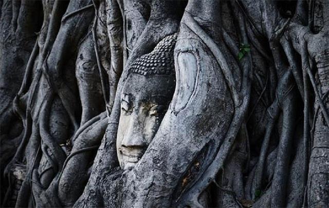 Kỳ lạ bức tượng Phật nằm trong hốc cây long não hơn 1.000 năm tuổi - 4