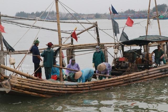 Ngư dân Nam Định thu tiền triệu nhờ đánh bắt sứa biển - 2