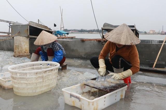 Ngư dân Nam Định thu tiền triệu nhờ đánh bắt sứa biển - 5