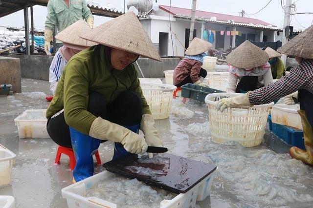 Ngư dân Nam Định thu tiền triệu nhờ đánh bắt sứa biển - 4